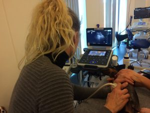 Dyrlæge scanner en gravhund, der ligger på ryggen.